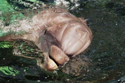 Delfin Fütterung - Sea World