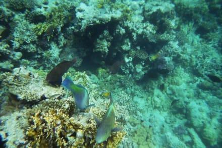 Das Riff - Schnorcheln Makadi Bay