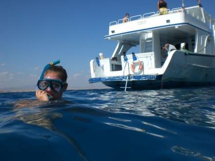 Schnorcheltour Dolphinhouse - Schnorcheln Dolphinhouse Marsa Alam