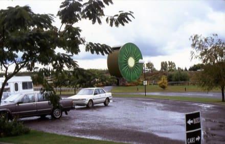 Eingang zur Kiwi-Plantage - Kiwifruit Country