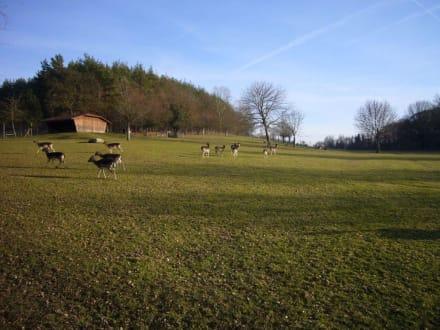 Tier- und Freizeitpark Allensbach - Wild- und Freizeitpark Allensbach