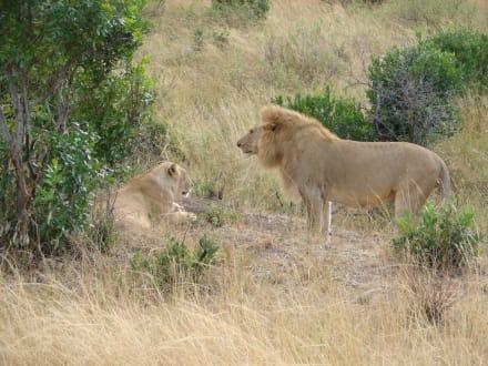 Honeymoon Place - Masai Mara Safari