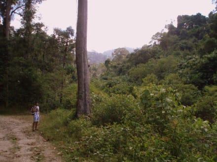 weit und breit nur Dschungel - Ton Chong Fah Wasserfall
