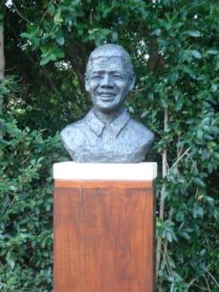 Auch Nelson Mandela war schon da - Botanischer Garten Kirstenbosch