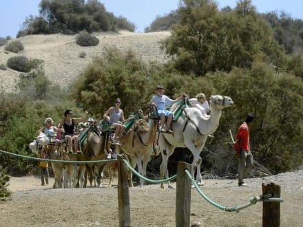 Kamelsafari - Kamelreiten Maspalomas