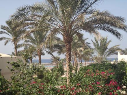 Hurghada coral beach hotel (4 hvězdičky)