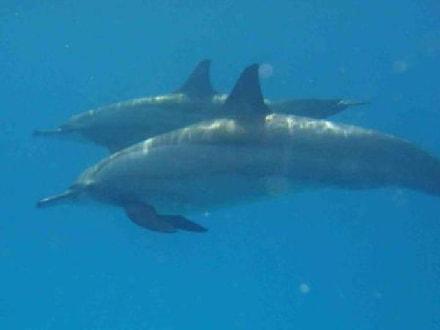 "Dolphins-House - Delfin Tour ""Dolphine House"" El Gouna"
