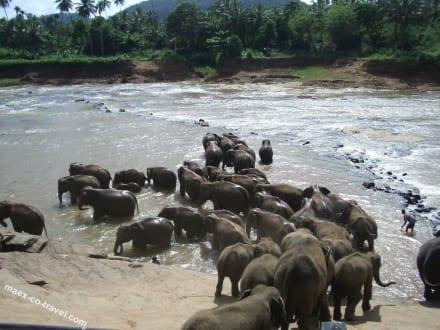 große Freude beim Bad - Elefantenwaisenhaus Pinnawela