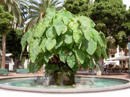 Brunnen im Park - Plaza del Charco