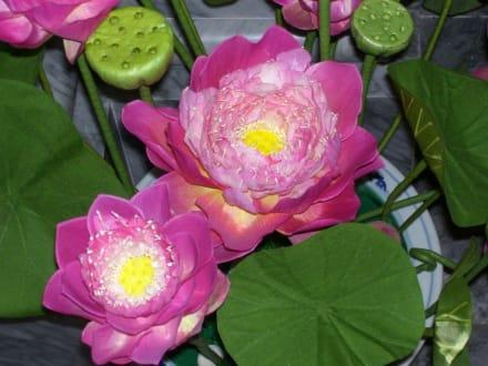 Tempelblume - Wat Sothon