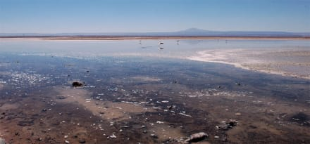 Laguna Chaxa im Sektor Soncor des Salar de Atacama - San Pedro de Atacama