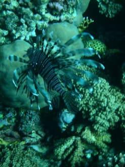 Unterwasserwelt 7 - Tauchen Marsa Alam