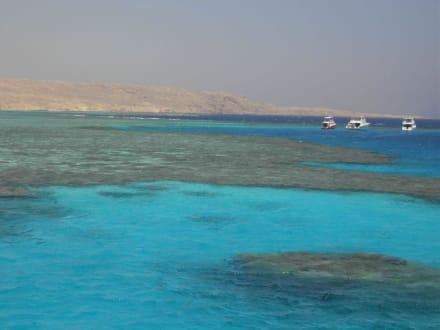 korallen - Schnorcheln Hurghada