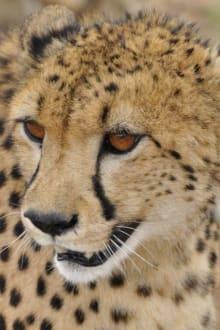 Unwirkliche Nähe - Etosha Nationalpark