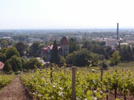 Blick auf Bad Vöslau - Bad Vöslau