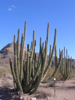 Organ Pipe Cactus National Monument - Organ Pipe Cactus National Monument