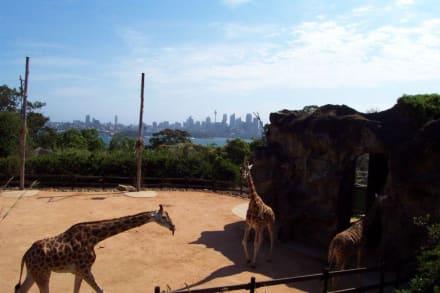 Skyline und Giraffen - Taronga Zoo