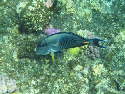 Unter Wasser - Akassia Diving Center
