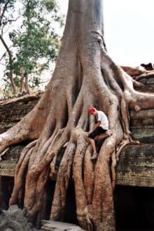 Verwilderung - Tempel Ta Prohm