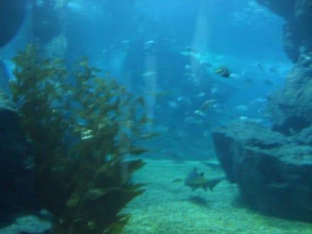 Siam Ocean World - SEA LIFE Ocean World