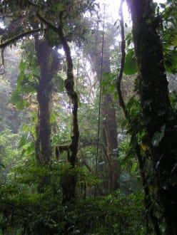 Monteverde Nationalpark - Nebelwald-Reservat Monteverde