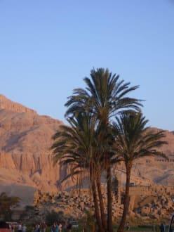 Rundplick vom Abflugfeld - Ballonfahrt Luxor