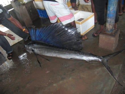 Market/Bazaar/Shopping center  - Negombo Fish Market
