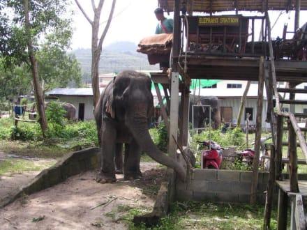 Elefanten Safari auf Phuket - Elefantenreiten Bang Tao Bay