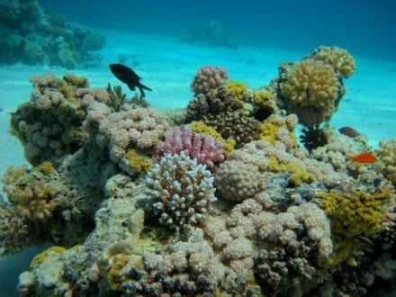 Unterwasserwelt Sharm el Sheikh - Tauchen Sharm el Sheikh