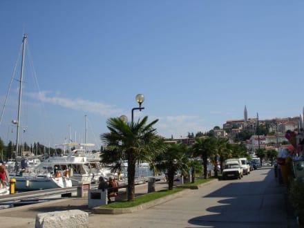 Hafen Vrsar - Hafen Vrsar