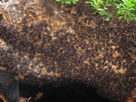 Goa Lawa - Fledermaustempel - Goa Lawah / Fledermaustempel