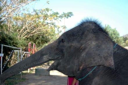 Torööht - Elefantenreiten Chiang Mai