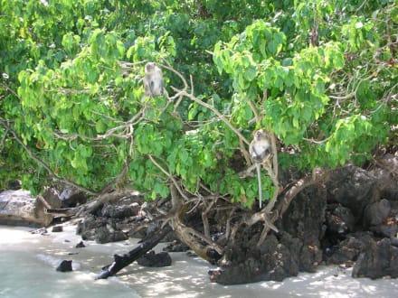 monkey island - Monkey Island