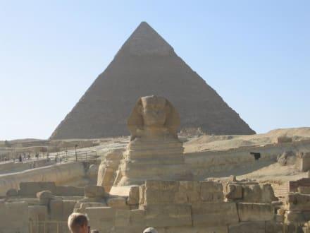 Sphinx und Pyramide - Sphinx von Gizeh