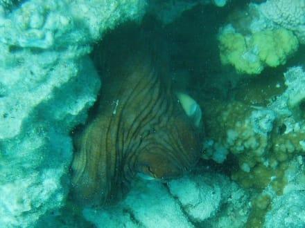Octopus - Ausflug mit Mohamed