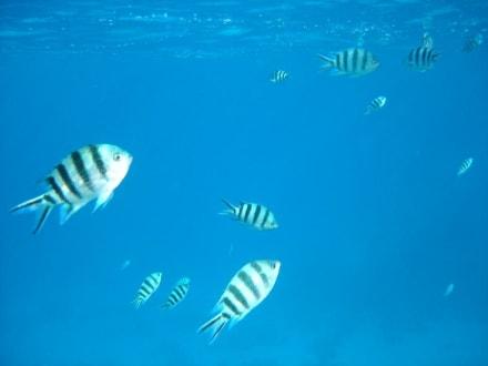 Schnorcheltrip - Schnorcheln Hurghada