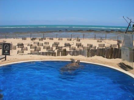 Projekt Tamar - Meeresschildkrötenstation Projeto Tamar