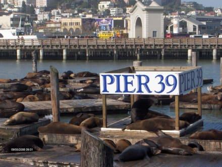 Seelöwen - Pier 39
