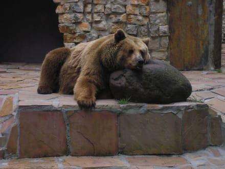 Bärenhitze - Zoo Augsburg