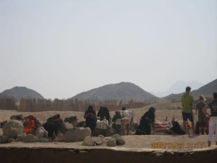 Kamele... sind einsatzbereit - Wüstentour Hurghada