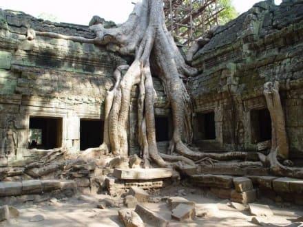 Tempel Ta Prohm - Tempel Ta Prohm