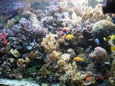 Ein herrliches Aquarium - DORMERO Hotel Rotes Ross Halle