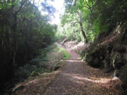 Auf dem Weg zum Keanae Arboretum - Straße nach Hana (Road to Hana)