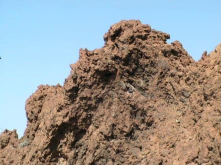 Rund um den Vulkan Teide - Teide Nationalpark
