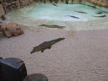 Krokodilgehege. - Reitschule Rancho Texas