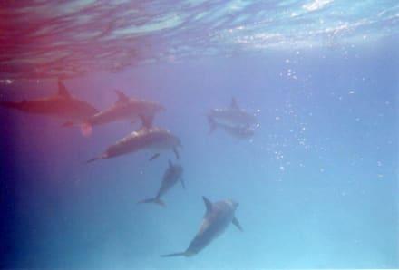 Unbeschreiblich - Delfin Tour Hurghada