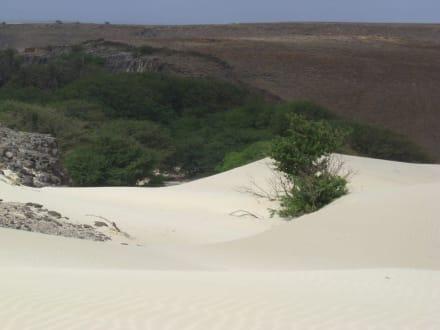 Ausflug im Süden - die Dünen arbeiten sich vor - Wüste Viana