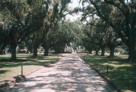 Boone Hall Plantage - Boone Hall Plantation