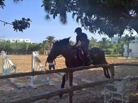 Springen ist fast wie fliegen - Reitstall des Hotel Le Sultan