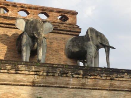 Die schönen Elefanten - Wat Chedi Luang
